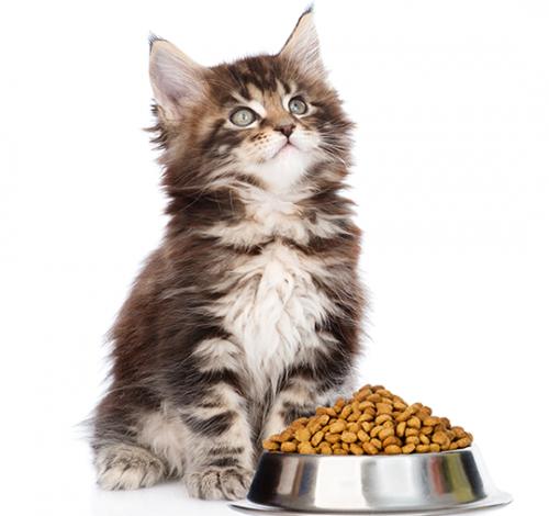Alimentación Gatos