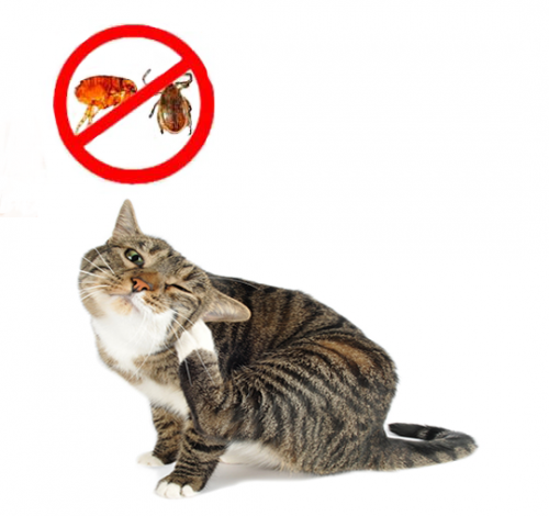 Antiparasitarios gatos
