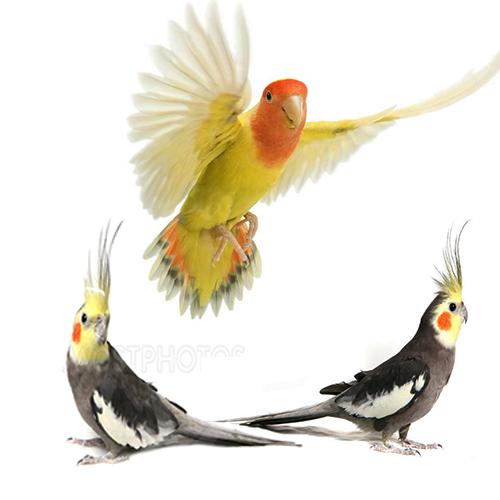 Aves-Pájaros