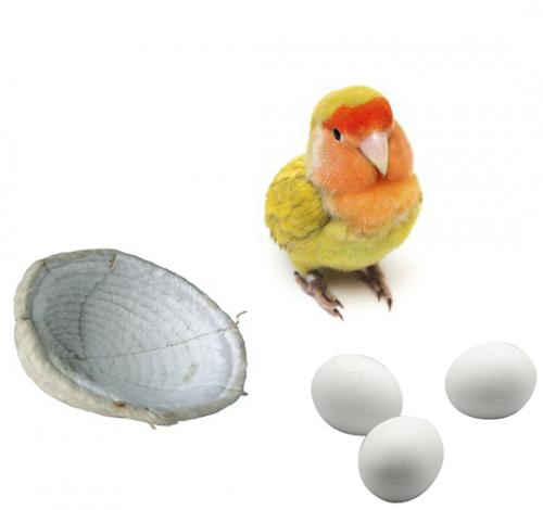 Accesorios Aves-pájaros