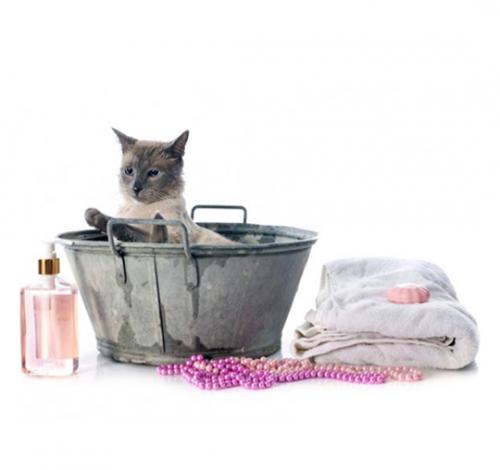 Higiene gatos