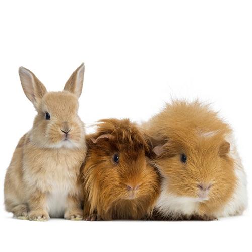 Conejos Y Roedores