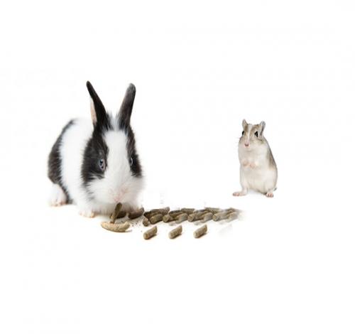 Alimentación Conejos y Roedores