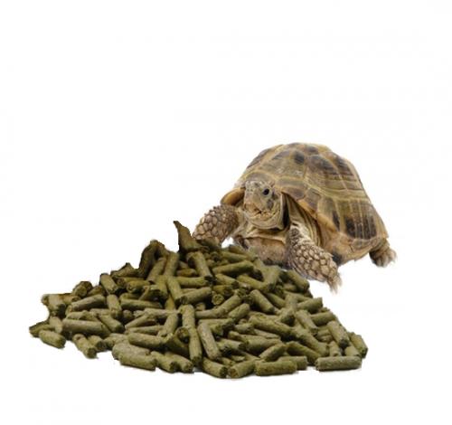 Alimentación Tortugas Tierra