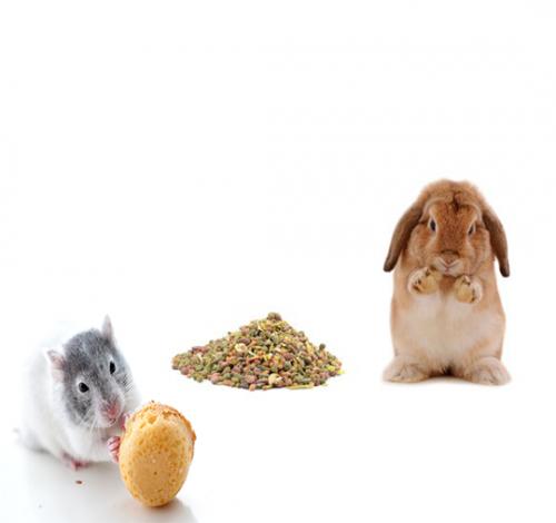Golosinas Conejos y Roedores
