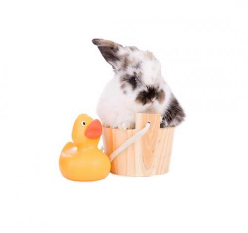 Higiene conejos y roedores