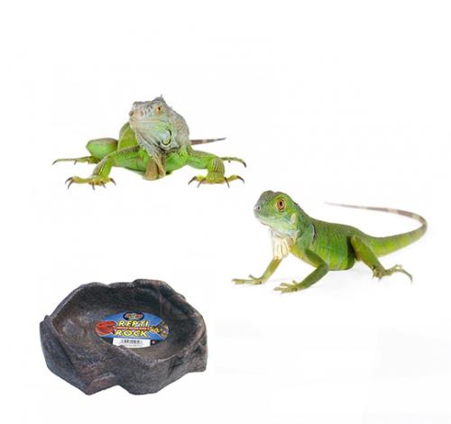 Accesorios Iguanas